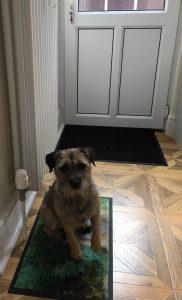 ised dog training station mat